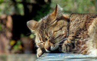 Сколько и как спят кошки