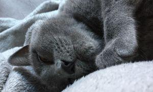 Почему кошки храпят во сне