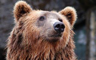 Где и сколько спят бурые и белые медведи